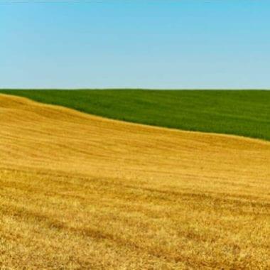 """Link to """"Rural Landscape"""""""